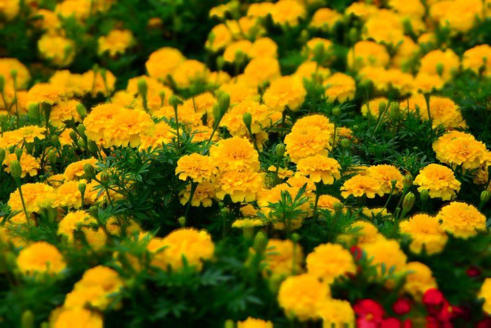 Οι φίλοι είναι λουλούδια